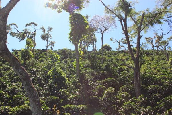 Nicaragua La Arabia - Evermore