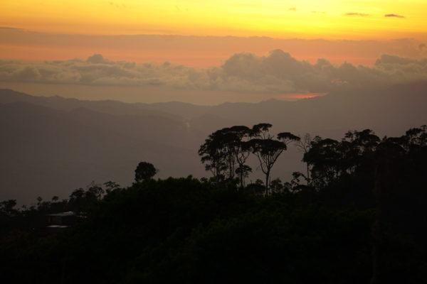 Uitzicht vanaf Coffea Diversa | Evermore