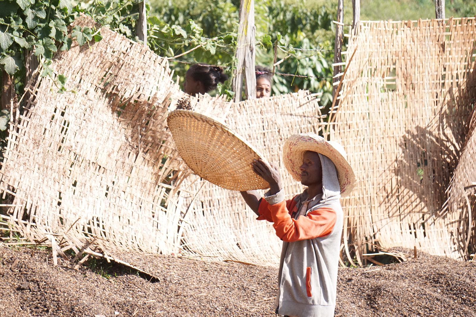 Ethiopië: de bakermat van de koffie