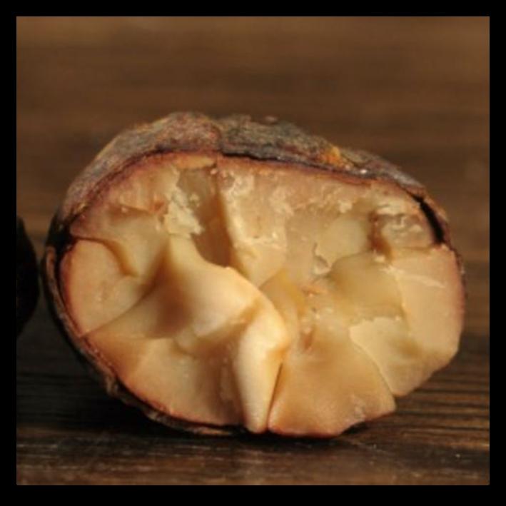 Piura Bianco Cacao Bean