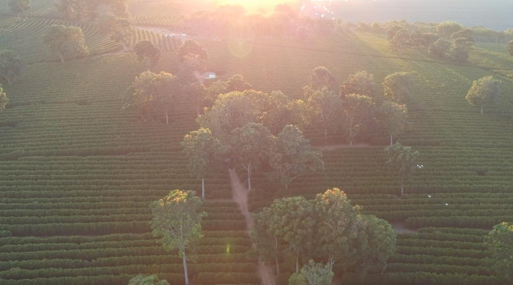 Sunrise at Fazenda Estrela