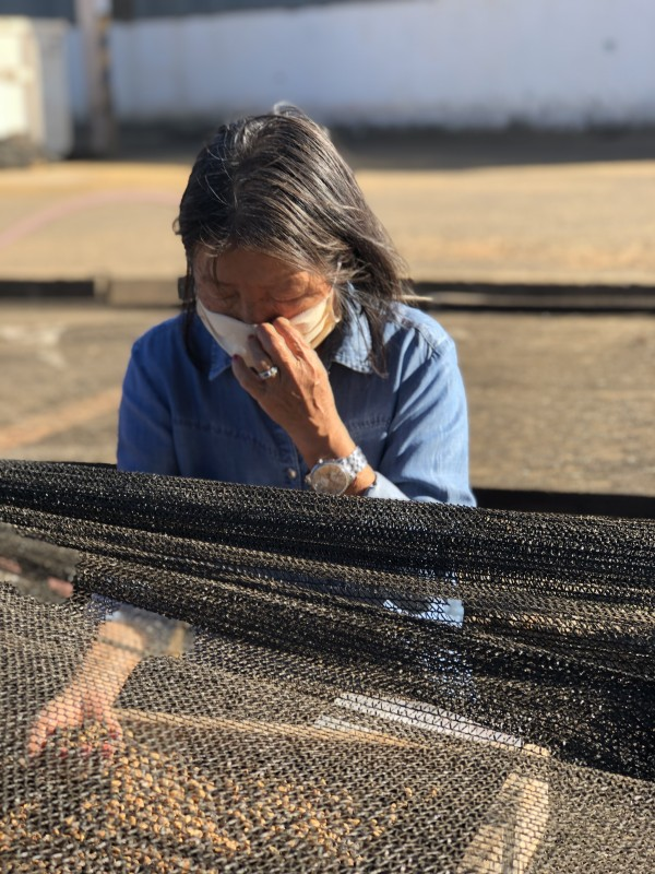 Marie Nakao Sasaki showing the honey process